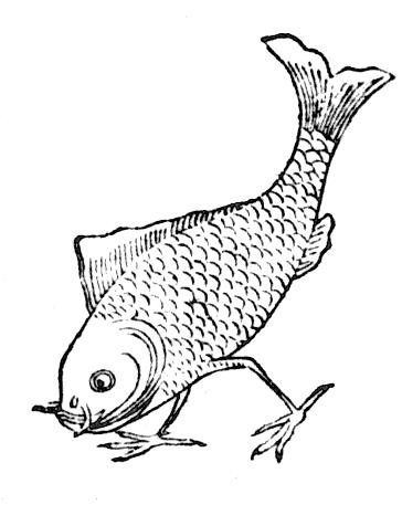 fishbird2